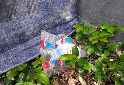 A plastic bag in a bush near the Australian Parliament House.